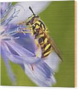 Hover Fly Wood Print by Todd Bielby