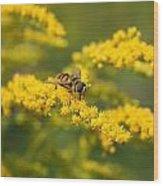 Hoverfly Feeding Wood Print