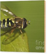 Hoverfly On A Leaf Wood Print