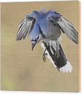 Hovering Billy Wood Print