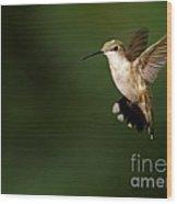 Hovering Hummingbird  Wood Print