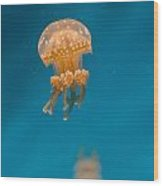 Hovering Spotted Jelly 1 Wood Print
