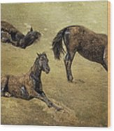 How A Black Horse Turns Brown - Pryor Mustangs Wood Print
