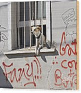 How Much Is That Doggie In The Window? Wood Print by Kurt Van Wagner