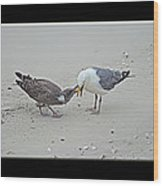 How To Eat A Blue Crab - Great Black Backed Gull In Training Wood Print