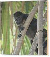 Howler Monkey Looking Down Wood Print