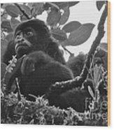 Howler Monkey's Wood Print