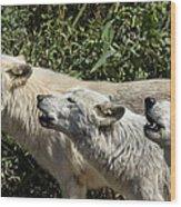 Howlin Artic Wolves Wood Print