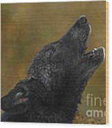 Howling Gray Wolf Pup Endangered Species Wildlife Rescue Wood Print