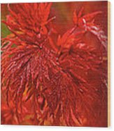 Hubble Galaxy With Red Maple Foliage Wood Print