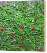 Huckleberry Bush Wood Print