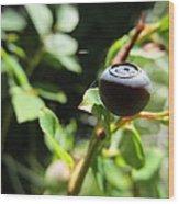Huckleberry Wood Print