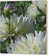 Hues Of Softness Dahlia Wood Print