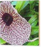 Huge Orchid Wood Print