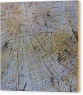 Huge Stump Wood Print