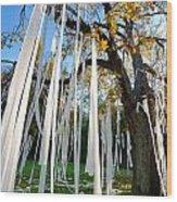 Huge Tree Covered In Toilet Paper Wood Print