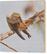Huimmingbird 5 Wood Print