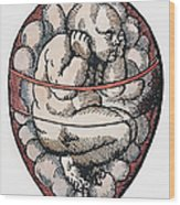 Human Fetus, 16th Century Wood Print