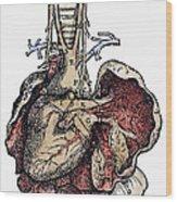 Human Heart, 1543 Wood Print