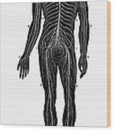 Human Nervous System Wood Print
