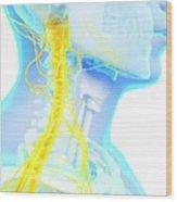 Human Spinal Cord Wood Print