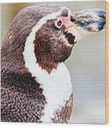 Humboldt Penguin Portrait Wood Print