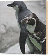 Humboldt Penguins Wood Print