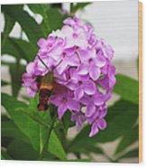 Humingbird Moth Wood Print