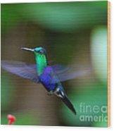 Humminbird In Flight   Wood Print