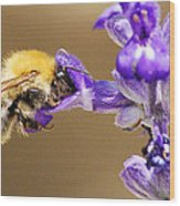 Humming Bee  Wood Print