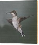 Humming Bird 1 Wood Print