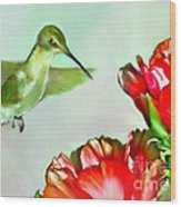 Humming Bird And Cactus Flowers Wood Print
