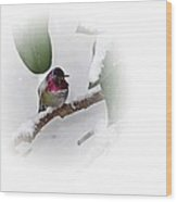 Humming Bird And Snow 2 Wood Print
