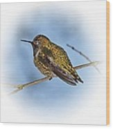Humming Bird And Snow 3 Wood Print