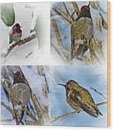 Humming Bird And Snow 4 Pack Wood Print