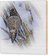 Humming Bird And Snow 5 Wood Print