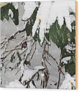 Humming Bird And Snow Wood Print