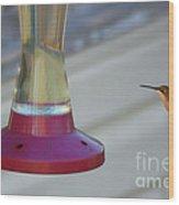 Humming Bird Approaching Wood Print