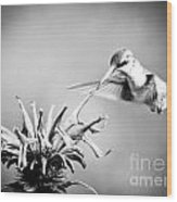 Hummingbird Black And White Wood Print