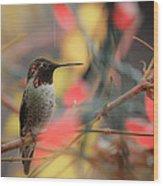 Humming Bird Christmas Wood Print