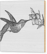 Humming Bird Wood Print