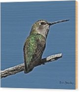 Humming Bird On A Stick Wood Print