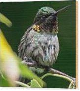 Humming Bird Wood Print