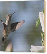 Hummingbird 2 Wood Print
