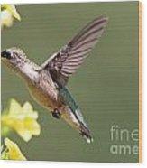 Hummingbird 3731 Wood Print