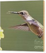 Hummingbird 3733 Wood Print