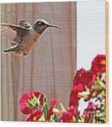 Hummingbird 4533 Wood Print