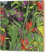 Hummingbird And Crocosmia Lucifer Wood Print