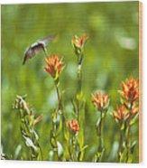 Hummingbird And Paintbrush Flower Wood Print