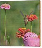 Hummingbird And Zinnias Wood Print